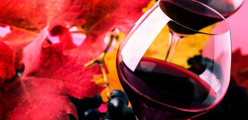 Produzione di vini rossi ad Albenga di alto pregio