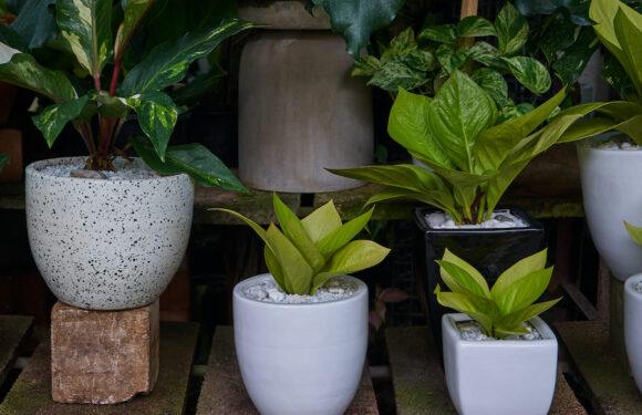 Cosa sono le piante purifica aria e perché sono importanti