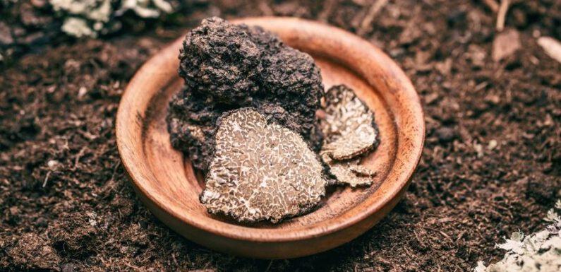 Tartufo nero: un ingrediente unico e dal gusto intenso