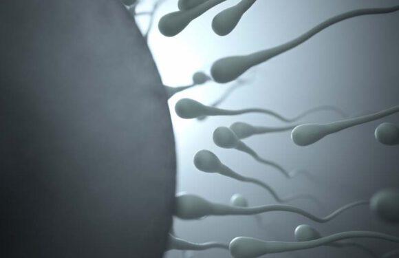 Fertilità maschile: scopri di più sull'argomento
